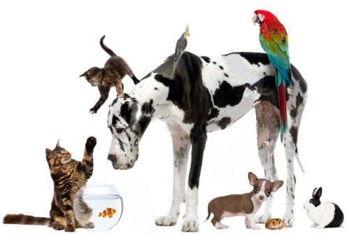 You And Your Veterinarian Make Up The All Star Team When It Comes To Keeping Your Pet Healthy But You Re Not Just A Most Pet Day National Pet Day Pet Sitters