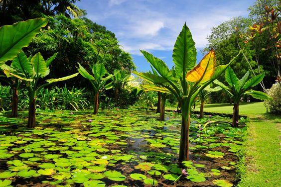 Orto botanico nazionale delle Seychelles Fotografia Google Earth