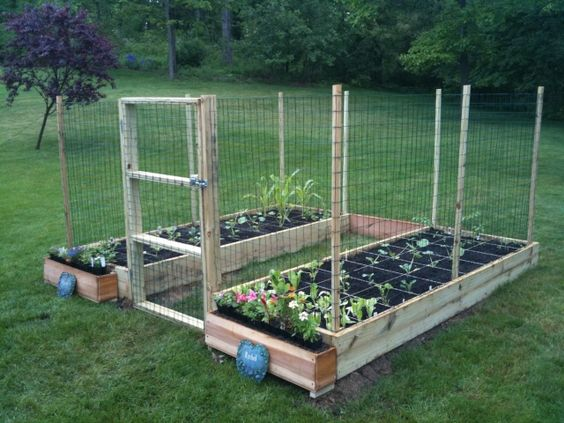 Square Foot Garden With Hinged Doors Made Of Chicken Wire Gardening Pinterest Gardens