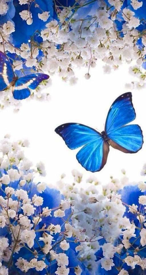 Blau Blue Beautiful Nature Wallpaper Butterfly Wallpaper Blue Butterfly Wallpaper Blue wallpaper butterfly images hd