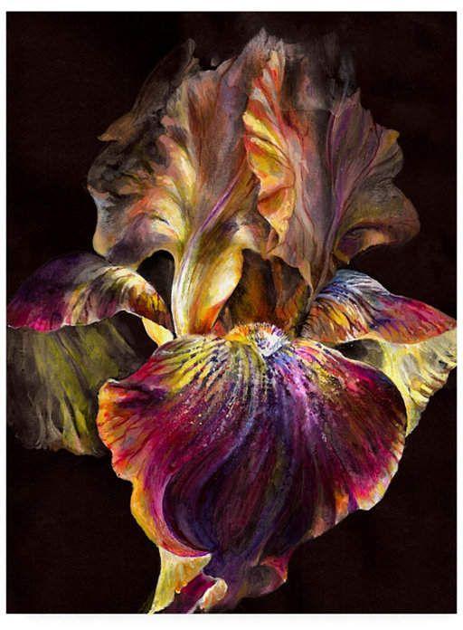 Photoinc Studio Iris On Black Canvas Art 15 5 X 21 Black Canvas Art Flower Painting Black Background Painting