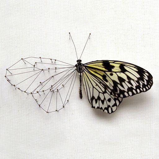 broken butterflies- anne ten donkelaar