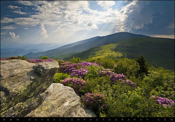 Roan Mountain from Appalachian Trail near Jane's Bald By Dave Allen Photography