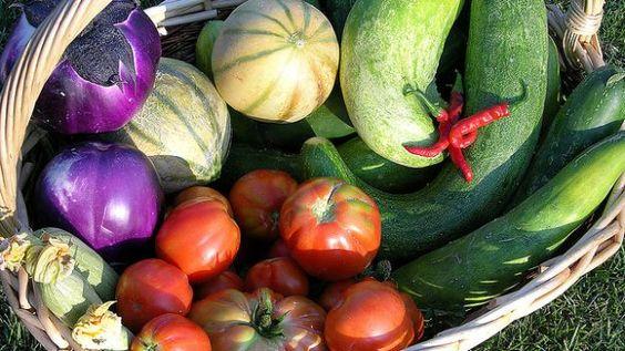 Come creare un orto in community: Grow the Planet