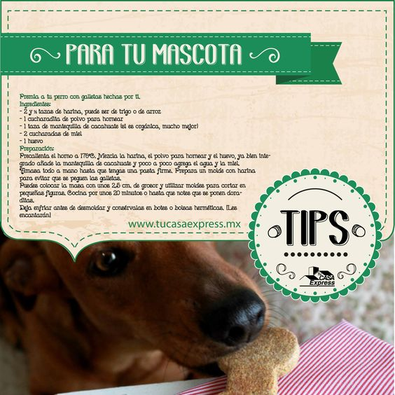 Premia a tu perro con galletas hechas por ti.