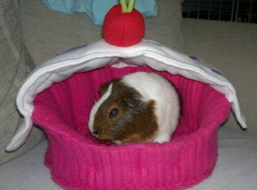 Guinea pig bed guinea pigs pinterest guinea pigs for How to make a guinea pig bed