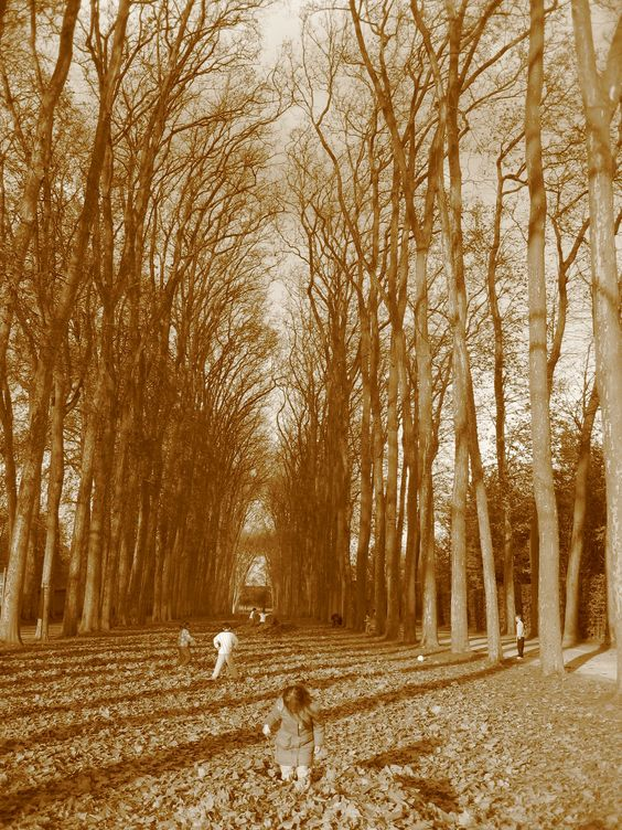 The woods in the grounds of Versailles