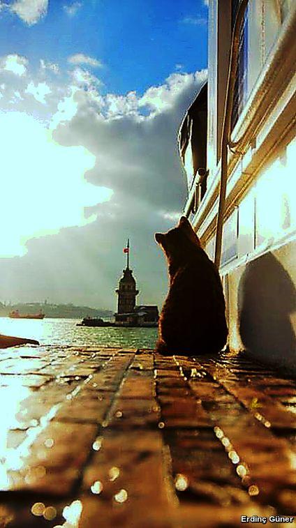 雨上がりの港の猫