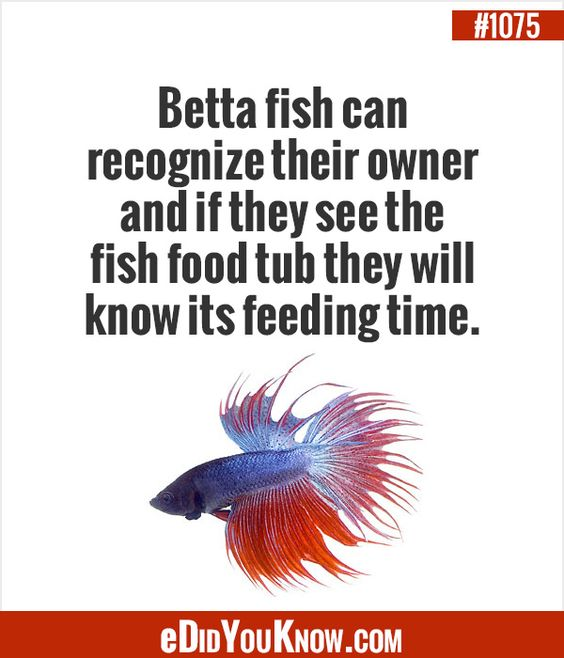 The o 39 jays fish food and babies on pinterest for Food for betta fish