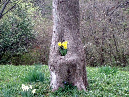 The Blub Tree