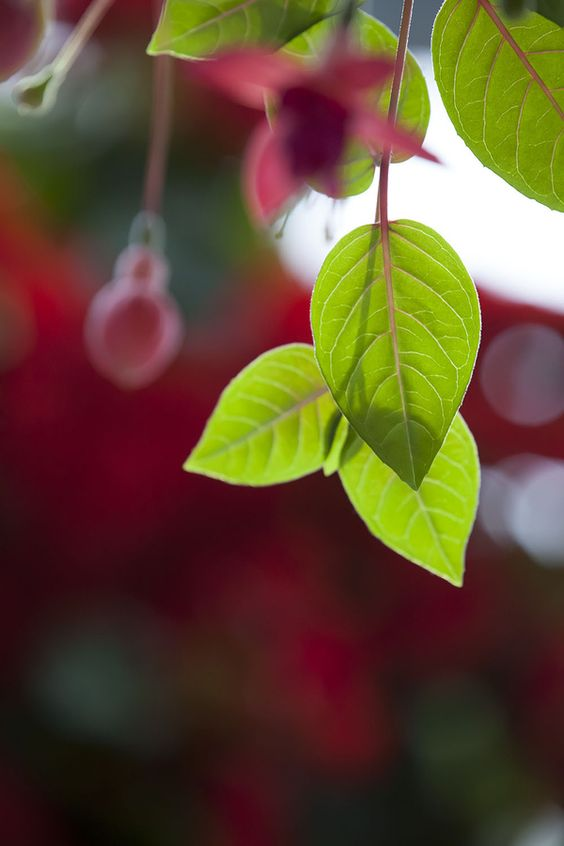 Pin By Danette Woods On Photography Plant Leaves Leaves My Secret Garden