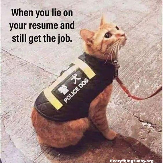 Funny Caption Funny Cat Picture When You Lie On Your Resume And Still Get The Job Cat Wearing Police Dog Funny Animal Memes Cute Funny Animals Funny Cat Memes