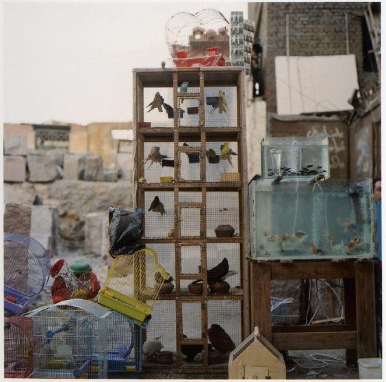 Charlotte Dualé Cairo Streets Display