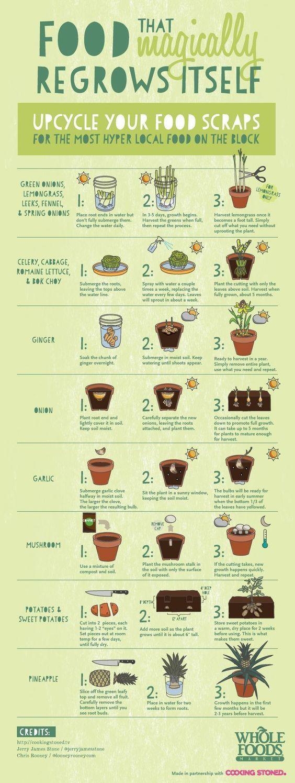 16 Fruits & Veggies you can regrow from scraps