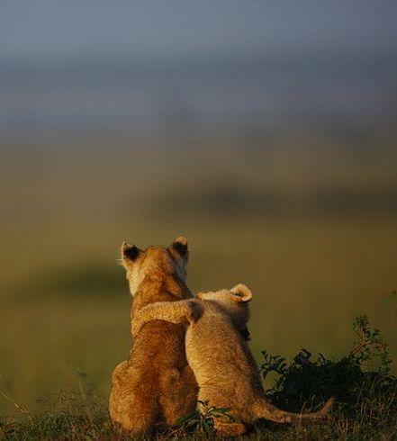 buddies by serhatdemiroglu