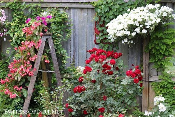 Old wooden ladder with hanging basket and roses | 21 Gorgeous Flower Planter Ideas