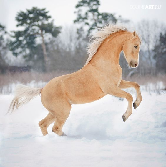 Palomino ...........click here to find out more http://googydog.com