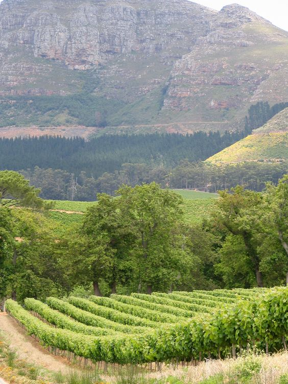 Cape Wine Lands South Africa