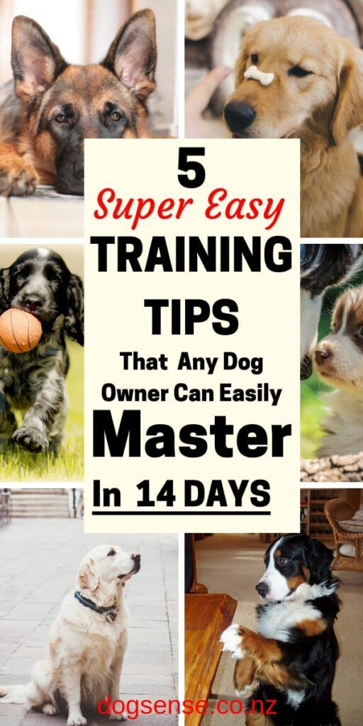 Dog Training Tips 5 Of The Most Simple But Best Things To Train