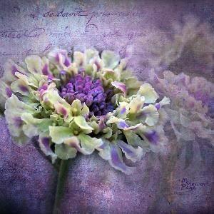 "~~ "" Lavender & Lace"" ~~ by elle.coetzee.5"
