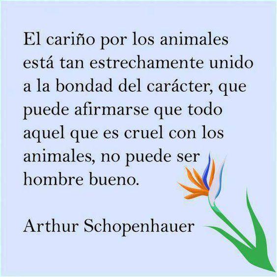 El cariño por los animales