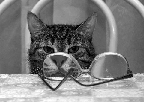 cat with big nose