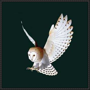Paper models barn owls and owl on pinterest for Papercraft bird template