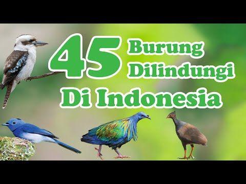 45 Jenis Burung Yang Dilindungi Di Indonesia Youtube Burung Burung Cantik Jenis
