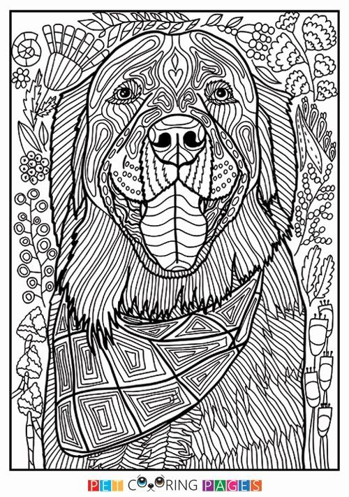 28 Golden Retriever Coloring Page In 2020 Horse Coloring Pages Animal Coloring Pages