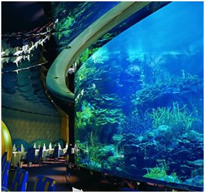 Come and meet the 10, marine animals that inhabit the Aquarium du Québec: fish, reptiles, amphibians, invertebrates, and sea mammals. Among them, the famous polar bears, walruses, and seals will provide you with unique moments.
