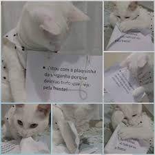 Resultado de imagem para gatos com plaquinha da vergonha