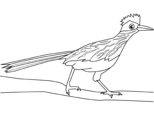 Top 7 Roadrunner Coloring Pages For Boys And Girls