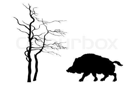 Bild von 'Silhouette Wildschwein auf weißem Hintergrund' on Colourbox