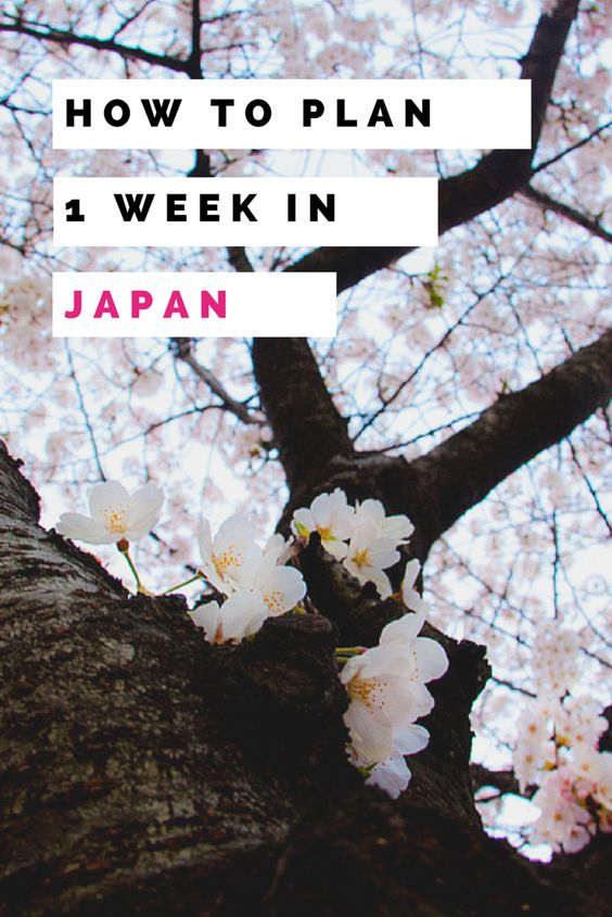 How to plan for a vacation in Japan. I went for 1 week to Kyoto, Osaka, and Nara and these are my tips for planning a trip to Japan.