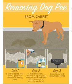 Quick tip for removing dog pee from carpet or upholstery. First thing sprinkle a generous amount of baking soda over the wet stain to neutralize the odor. Then spritz with a vinegar-and-water solution and add in a bit of lemon essential oil to disinfect t