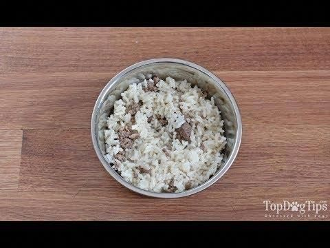 Obedience Training At Home Dogtrainingvideo Make Dog Food