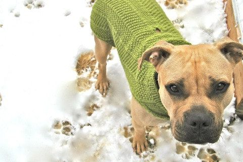 Free Patterns For Knitting Looms : Nala Needs a Coat LARGE Dog Sweater Pattern by ChineseArithmetic, USD5.00 cra...