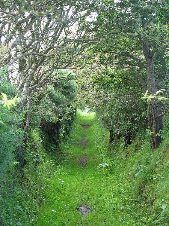Tree cave in Ireland