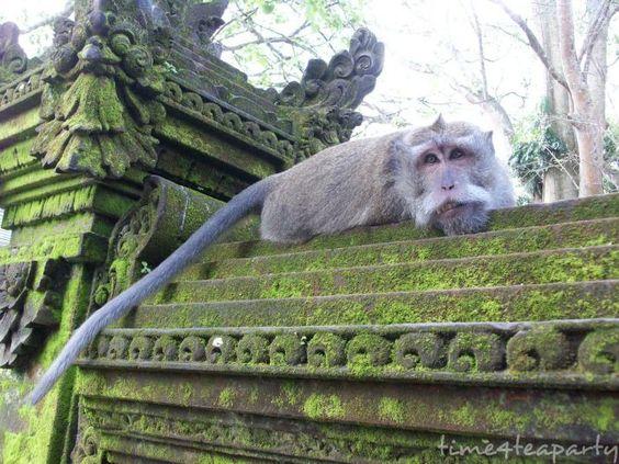 Monkey Forest 9: