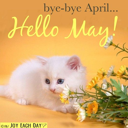 1ac775f517e37fdf964f328e8cdac2c0--goodbye-april-hello-may-kitten-cat.jpg