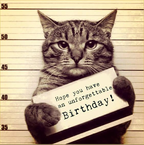 Funny Animals Memes That Make You Laugh Out Loud Cat Birthday