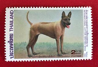 Thai Ridgeback Dog แสตมป หมาไทยหล งอาน แสตมป ส ตว เล ยง