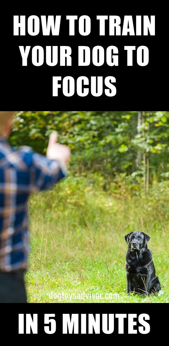 Can You Get Your Dog To Focus On You Instead Of Everything Else