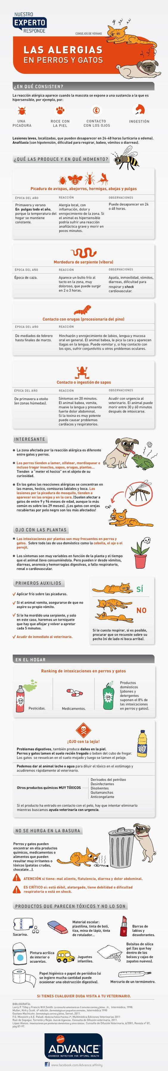 Las alergias en perros y gatos #infografia