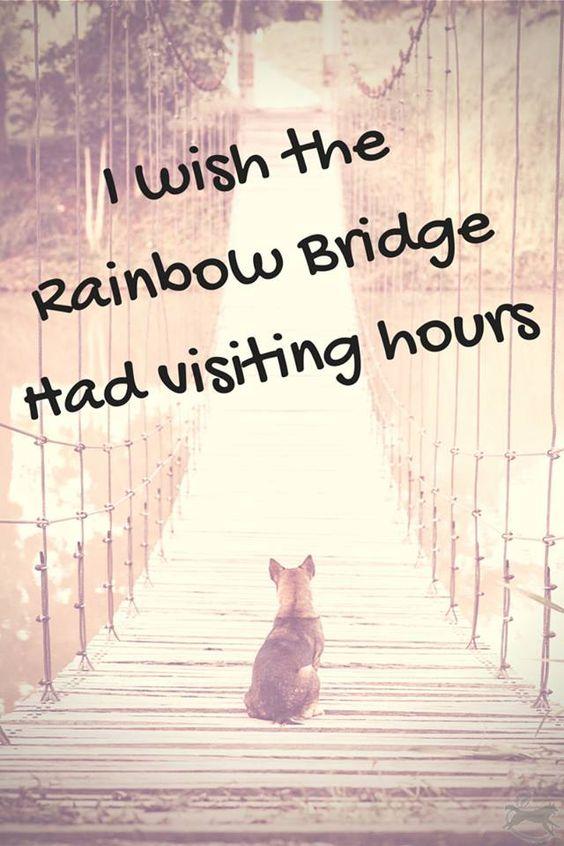 I wish the Rainbow Bridge had visiting hours....