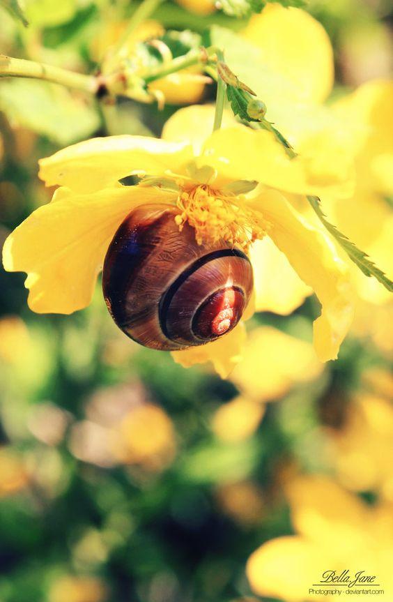 snail climbs by xxbellcatxx