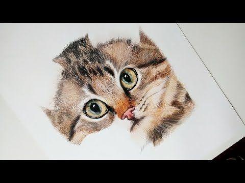 Como Dibujar Y Pintar Un Gato Realista How To Draw And Paint A Realistic Cat Youtube Como Dibujar Un Gato Cómo Dibujar Cosas Dibujos