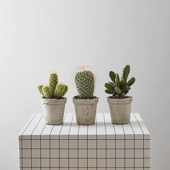 (Instagram @geo_fleur) An old photo but still a classic.  #geofleur #UrbanGarden #KeepYourUrbanHouseGreen #indoorjungle #plantsmakepeoplehappy #plantlove #urbangardening #PlantLife #plantlove #PlantHanger #PlantStyling #botanical #busyhands #BringingTheOutsideIn #BotanicalStyling #cacti #Cactus #cactusclub #cactilover #Cactusgram  #vsco #vscocam #plantstagram #growsomethinggreen