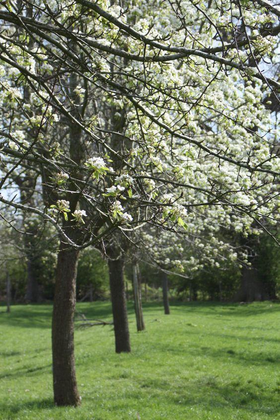 Perry Blossom