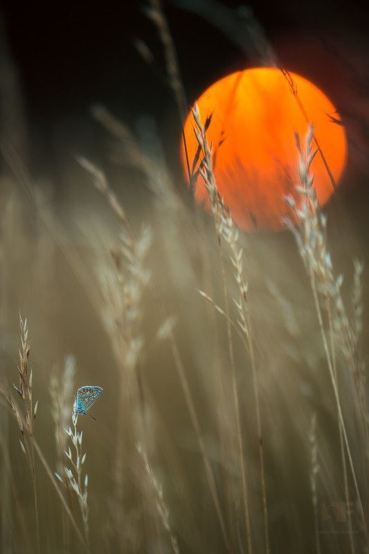 Harvest Moon, Looks Amazing ☄ #Nature: